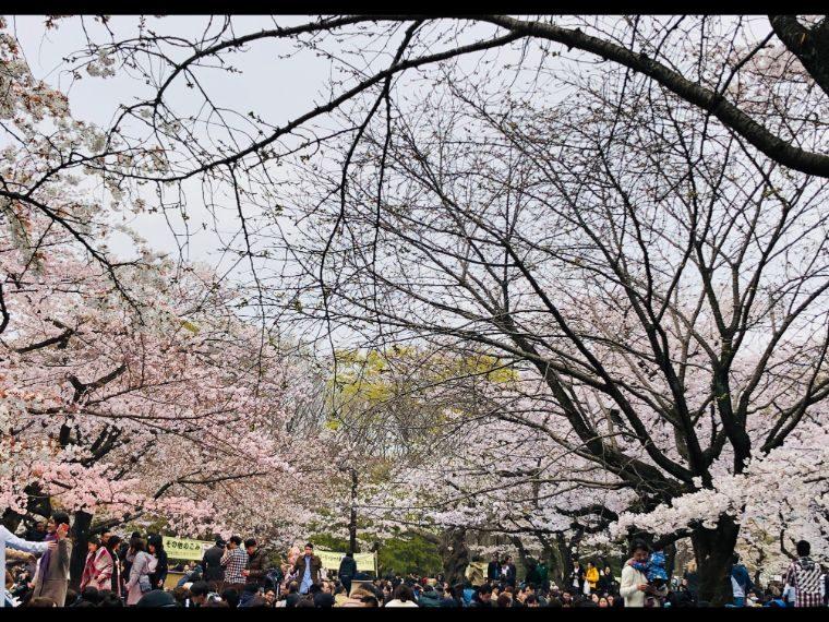 2019お花見1
